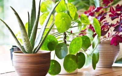 Plantes dépolluantes: une bonne résolution pour mon intérieur! Partie 1