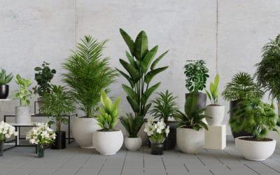 Plantes dépolluantes: une bonne résolution pour mon intérieur! Partie 2