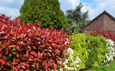 Protéger vos arbustes des fortes chaleurs